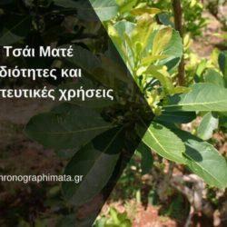Τσάι Ματέ