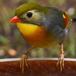 Το παραμύθι του φυλακισμένου πουλιού