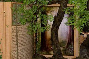 """Το δάσος με τα """"γιατί"""""""