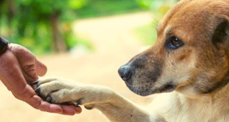Εκπαίδευση σκύλου: Πειθαρχία δεν σημαίνει τιμωρία!