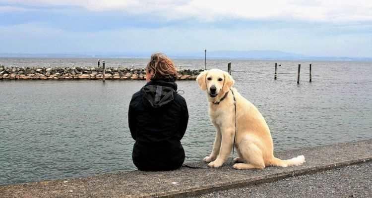 Τί πρέπει να μάθω στον (υπερ) προστατευτικό σκύλο μου
