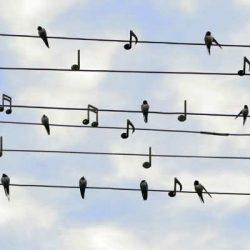 Η μαγεία της μουσικής