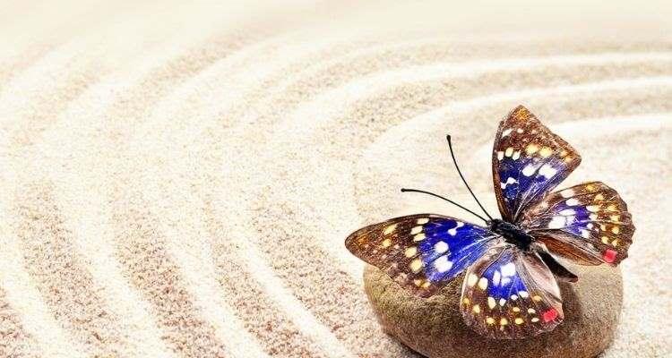 Μη γίνεις μια πεταλούδα σε κασετίνα